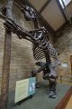 extinct mammal megatherium americanum natural history museum london museums galleries buildings architecture capital england english united kingdom british