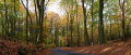 panoramic view forest floor leaves autumn time seasons seasonal environmental england uk marlow tree birch beech wood autumnal leaf fall season nature landscape environment woodland color colour roots trunk buckinghamshire bucks english angleterre inghilterra inglaterra united kingdom british