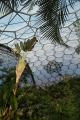 eden project banana palm rainforest biome tourist attractions england english botanical garden attraction architectural geodesic dome cornish cornwall angleterre inghilterra inglaterra united kingdom british