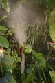 eden project steam inlets raise humidity rainforest biome tourist attractions england english botanical garden attraction architectural geodesic dome cornish cornwall angleterre inghilterra inglaterra united kingdom british
