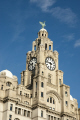 liver building birds liverpool north west northwest england english statues iconic northern britain merseyside scouse angleterre inghilterra inglaterra united kingdom british
