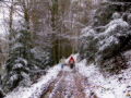 walking trail near naves southern limousin french landscapes european corr ze correze forest france monedieres mon di res winter valley wintery snow la francia frankreich