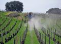 tending vineyards saint milion region france french landscapes european emilion aquitaine gironde viticulture viniculture vineyard grapevine winemaking bordeaux claret grapes vignoble cabernet sauvignon franc merlot la francia frankreich