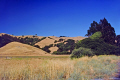 typical dry grasslands northern california summer months american yankee usa marin county headlands peninsula yellow arid parched californian united states
