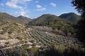 granada province spain olive grove hills sierra las guajaras andalucia spanish espana european espagne espa andalusia costa del sol mediterranean valley farm oil trees spanien la spagna