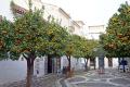 andalucia spain orange trees plaza manilva estepona spanish espana european espagna andalusia laga malaga costa del sol mediterranean citrus fruit spanien espa espagne la spagna