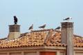 spotted roof estepona spain truth bird scarers birds aves animals animalia natural history nature spanish espagna andalucia andalusia laga malaga costa del sol mediterranean spanien espa espagne la spagna