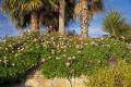 flowers cliffs near estepona spain plants plantae natural history nature spanish espagna andalusia laga malaga costa del sol flower plant floral spanien espa espagne la spagna