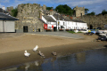 family swans row cottages uk towns environmental conwy north wales cottage welsh pa gales united kingdom british