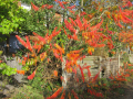 ferns autumn colours plants plantae natural history nature ferm essex england english angleterre inghilterra inglaterra united kingdom british