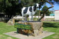 concrete cow brunswick junction celebrate town role western australia dairy industry australian milk