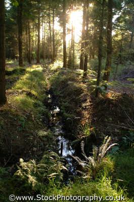 new forest south east southeast england english uk trees timber woods hampshire hamps angleterre inghilterra inglaterra united kingdom british