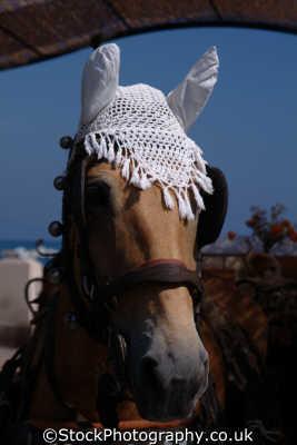 rapallo horse cap liguria italian european travel equine riviera italy italien italia italie europe