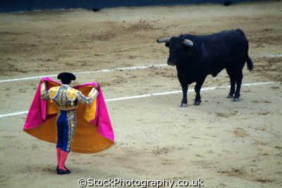 bullfight matadore bull madrid spanish espana european travel corrida bullfighting toros spain spanien españa espagne la spagna europe