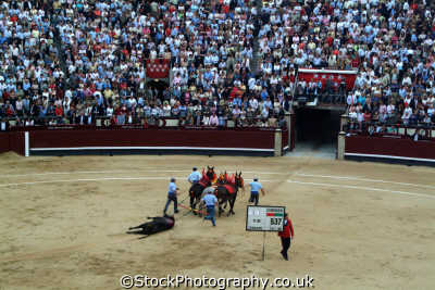 bullfight mule team dragging dead bull arena spanish espana european travel corrida bullfighting toros madrid spain spanien españa espagne la spagna europe
