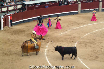 bullfight picador lances bull neck spanish espana european travel corrida bullfighting toros madrid spain spanien españa espagne la spagna europe