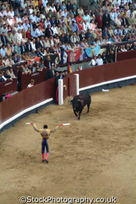 bullfight matadore prepares spear bull banderillas spanish espana european travel corrida bullfighting toros madrid spain spanien españa espagne la spagna europe