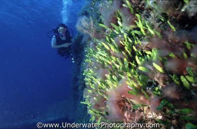 diver mediterranean wall walls divers diving people scuba underwater marine benny sutton cyprus europe european cypriot