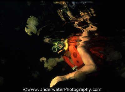 jellyfish lake snorkeller floating planktonic marine life underwater diving saltwater medusae benny sutton palau micronesia pacific oceanic sea oceans palaun
