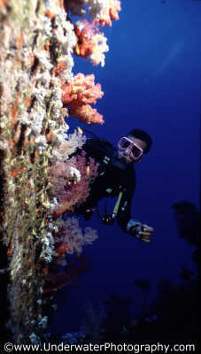 diver peering coral encrusted wreck superstructure wrecks seascapes scenery scenic underwater marine diving benny sutton red sea egypt pharoh middle east egyptian