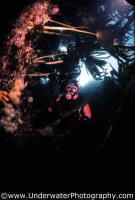 diver kelp weed attached marine life underwater diving benny sutton scottish borders scotland scotch scots escocia schottland united kingdom british