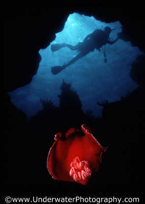 spanish dancer diver caves caverns seascapes scenery scenic underwater marine diving benny sutton red sea egypt pharoh middle east egyptian