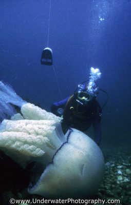 diver smb line rhizostoma pulmo seabed chesil beach dorset floating planktonic marine life underwater diving benny sutton england english angleterre inghilterra inglaterra united kingdom british