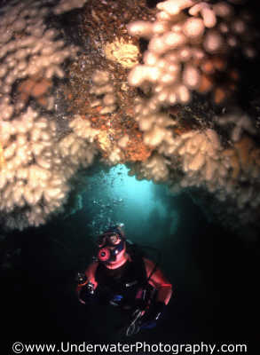 diver cave roof caves caverns seascapes scenery scenic underwater marine diving cavern benny sutton scottish borders scotland scotch scots escocia schottland united kingdom british