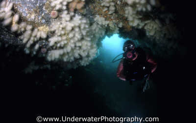 diver cave looking plumose covered roof caves caverns seascapes scenery scenic underwater marine diving cavern cavernous benny sutton scottish borders scotland scotch scots escocia schottland united kingdom british
