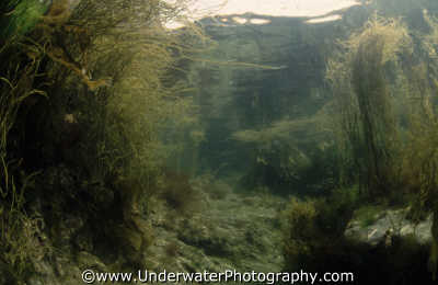 rockpool seascapes scenery scenic underwater marine diving tidal benny sutton england english angleterre inghilterra inglaterra united kingdom british