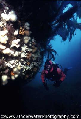 diver scenery uk temperate waters cold water seascapes scenic underwater marine diving benny sutton scottish borders scotland scotch scots escocia schottland united kingdom british
