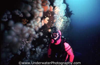 diver 3qtr wall uk temperate waters cold water seascapes scenery scenic underwater marine diving benny sutton scottish borders scotland scotch scots escocia schottland united kingdom british
