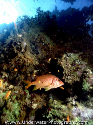 fish habitat pisces marine life underwater diving benny sutton red sea egypt pharoh middle east egyptian