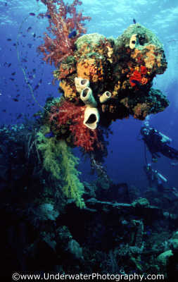 divers encrusted wreckage wrecks seascapes scenery scenic underwater marine diving benny sutton truk lagoon shipwrecks pacific oceanic sea oceans micronesia micronesian