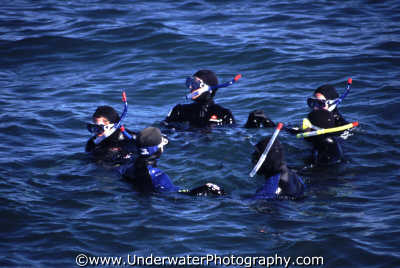 snorkellers waiting ring surface snorkelling divers diving people scuba underwater marine monterey california californian usa united states america american