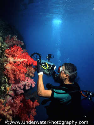 diver filming soft coral underwater video housing stingray photographers divers diving people scuba marine film palau micronesia pacific oceanic sea oceans palaun