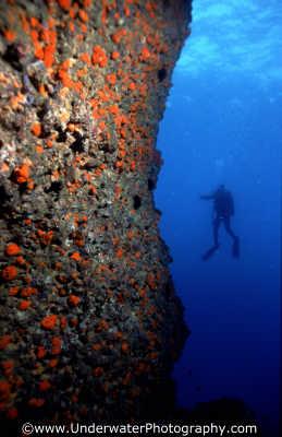wall diver amalfi coast italy walls divers diving people scuba underwater marine italien italia italie europe european italian