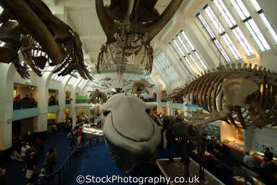 mammals gallery natural history museum museums galleries buildings architecture london capital england english uk kensington chelsea cockney angleterre inghilterra inglaterra united kingdom british