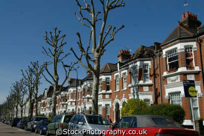 fulham street topped trees uk terraced houses british housing homes dwellings abode architecture architectural buildings hammersmith london cockney england english angleterre inghilterra inglaterra united kingdom