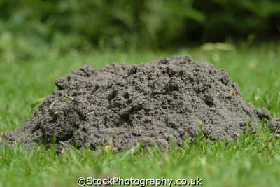 mountain molehill allegory abstracts misc. pests berkshire england english angleterre inghilterra inglaterra united kingdom british