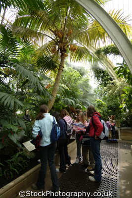 schoolchildren school trip inside palm house kew gardens botanical botany london parks capital england english uk horticulture humidity educational learning tropical richmond cockney angleterre inghilterra inglaterra united kingdom british