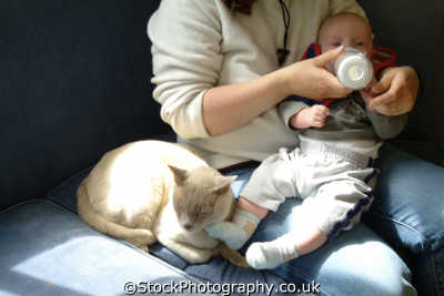 cat snuggling feeding baby foot anthony boys male child males masculine manlike manly manful virile mannish people persons west united kingdom british
