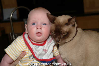 baby cat anthony boys male child males masculine manlike manly manful virile mannish people persons west united kingdom british