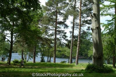 virginia water woodland london parks capital england english uk berkshire angleterre inghilterra inglaterra united kingdom british