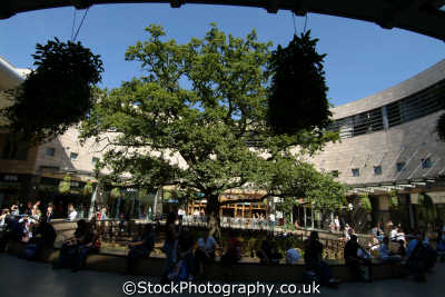 milton keynes oak court tree midsummer place shopping centre uk centres retailers trade centers commercial buildings british architecture architectural buckinghamshire bucks england english angleterre inghilterra inglaterra united kingdom