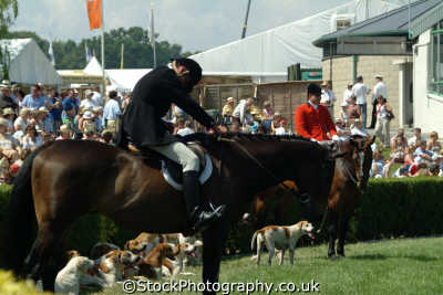 yorkshire huntsman hounds north east england northeast english uk hunting blood sports bloodsports great britain united kingdom british