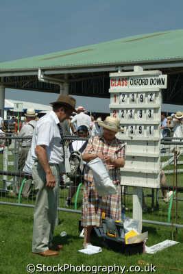 yorkshire scoring sheep judging north east england northeast english uk great britain united kingdom british