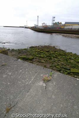 wick caithness harbour harbor uk coastline coastal environmental highlands islands scotland scottish scotch scots escocia schottland great britain united kingdom british