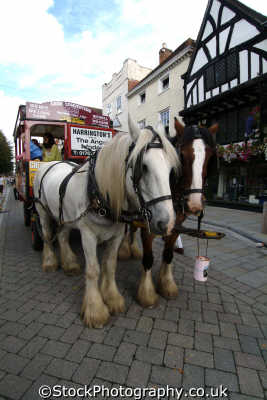 salisbury shire horse tour uk towns environmental wiltshire wilts england english great britain united kingdom british
