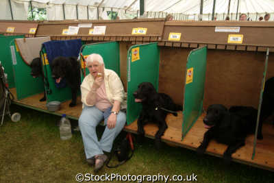 competitors dog royal cornwall farming countryside rural south west england southwest country english uk humourous cornish great britain united kingdom british